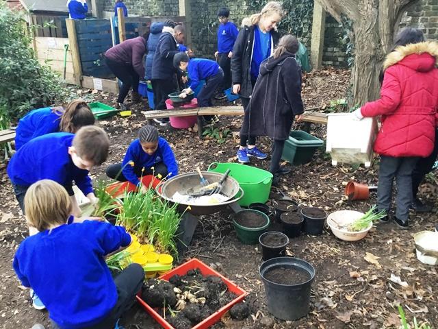 Spring Bulbs around Tyre Island - Heathbrook Primary School
